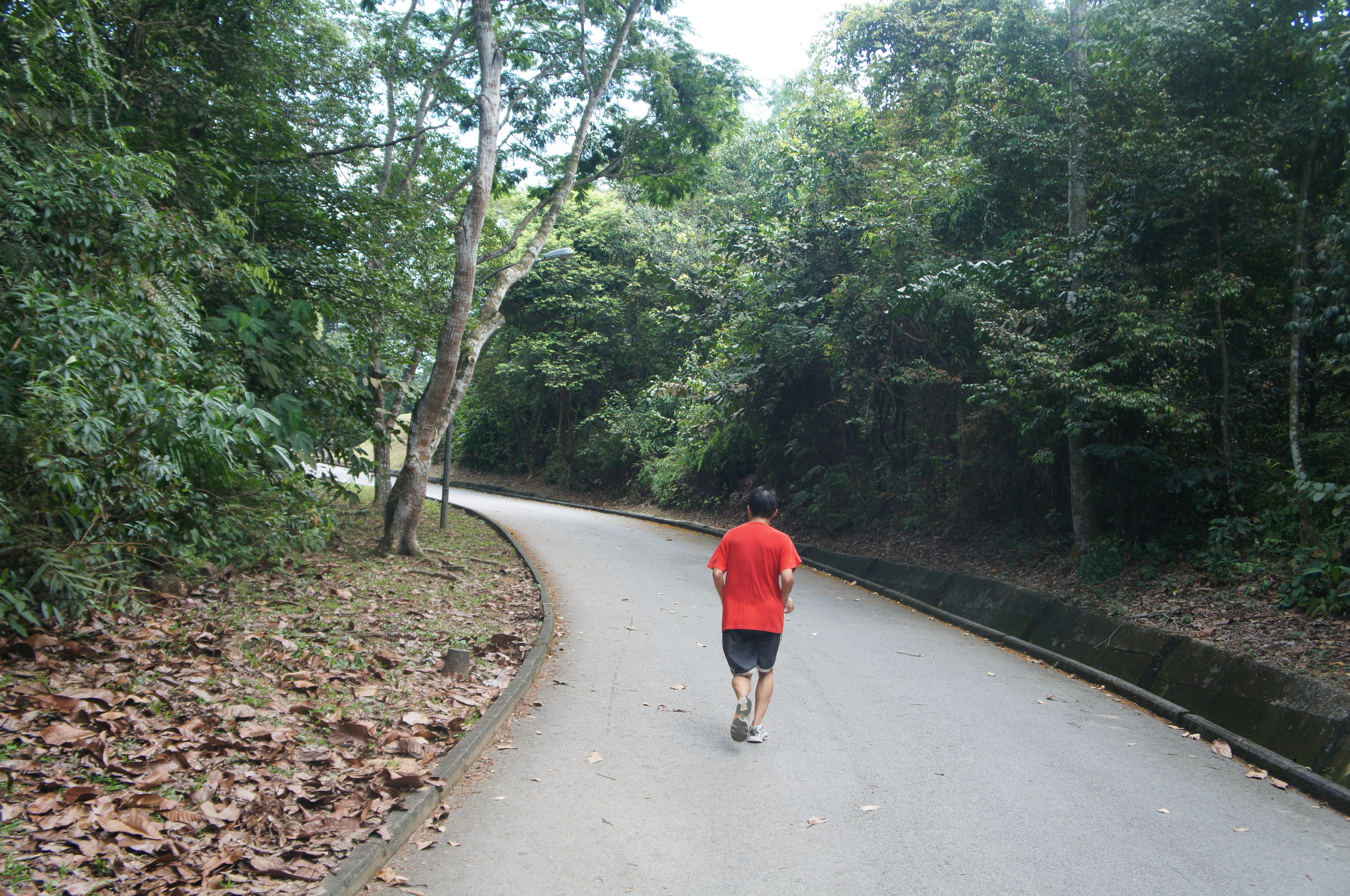 how to get to macritchie treetop walk
