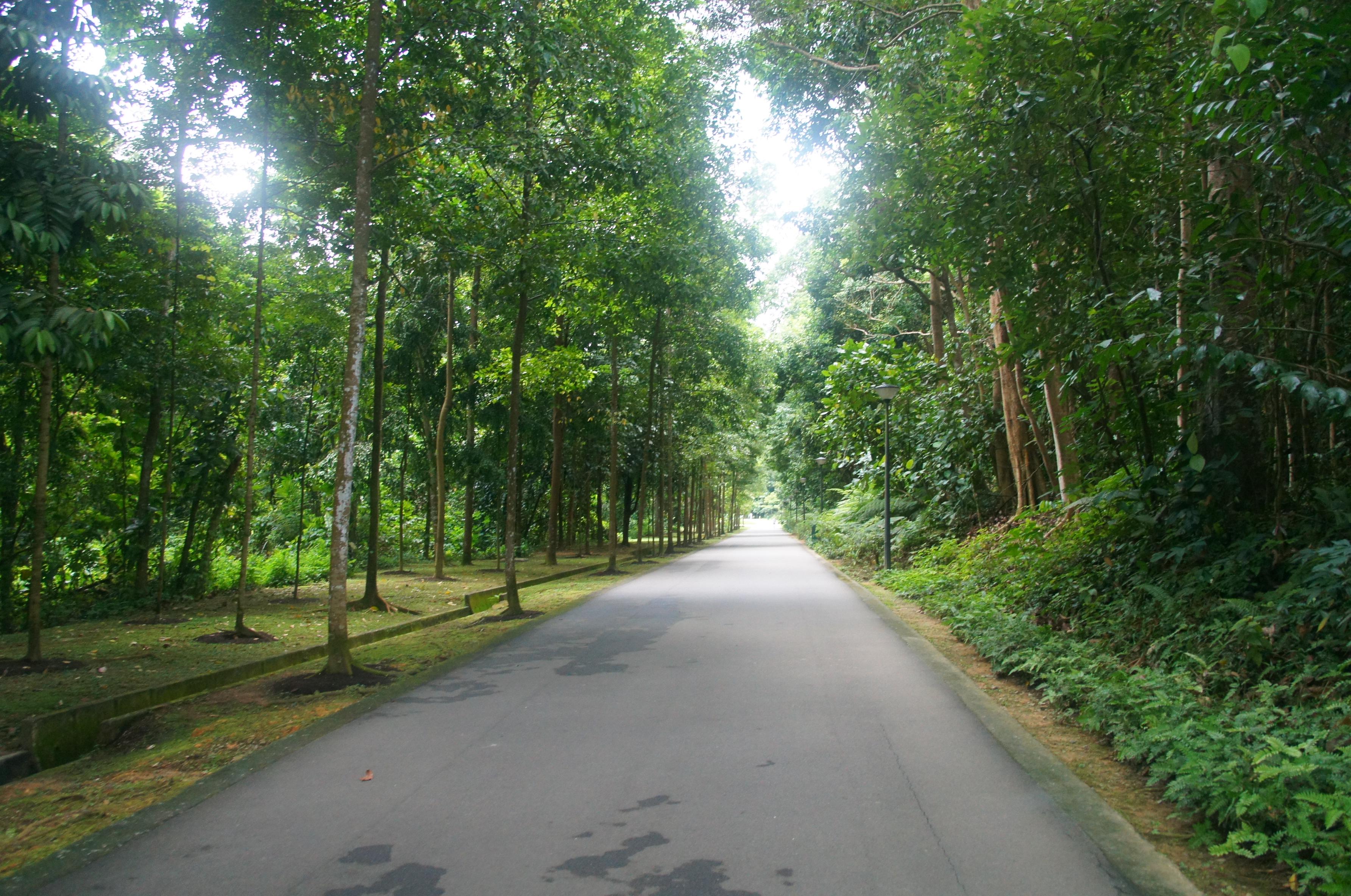 7 Bukit Batok Nature Park Ndash My Experiences