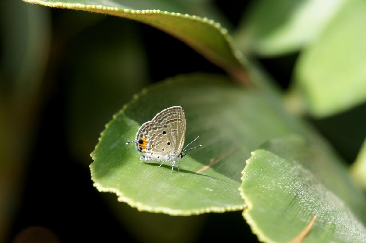 Cycad Blue